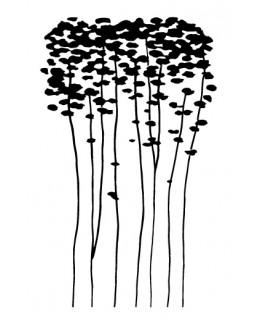 Млади евкалиптови дръвчета