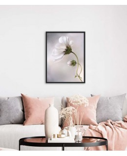 Бяло цвете Космос - Картина