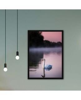 Лебед в езеро - Фото принт с рамка