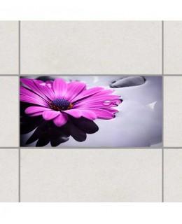 Гербер Виолет - деко стикери за плочки