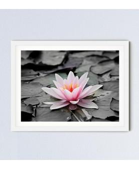 Водна лилия - Картина