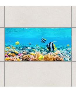 Екзотични рибки